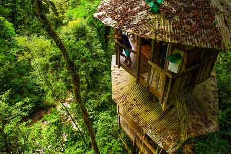 Eco-friendly Finca Bellavista Treehouse
