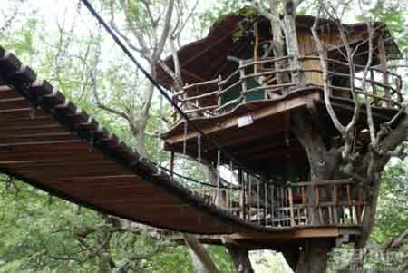 Nanshan Treehouse Resort
